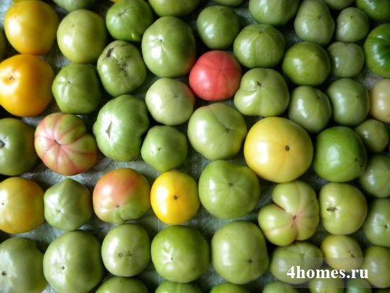 Как сделать чтобы зеленые помидоры покраснели дома 583