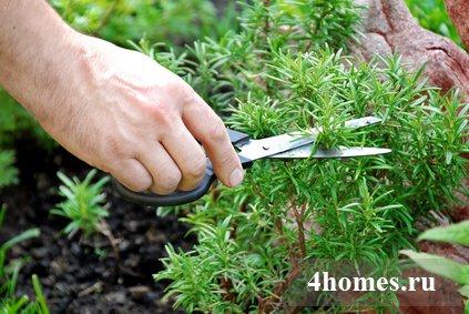 Как разбить садик для выращивания лекарственных и других трав?