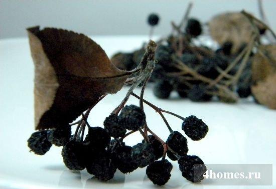 Размножение черноплодной рябины на даче