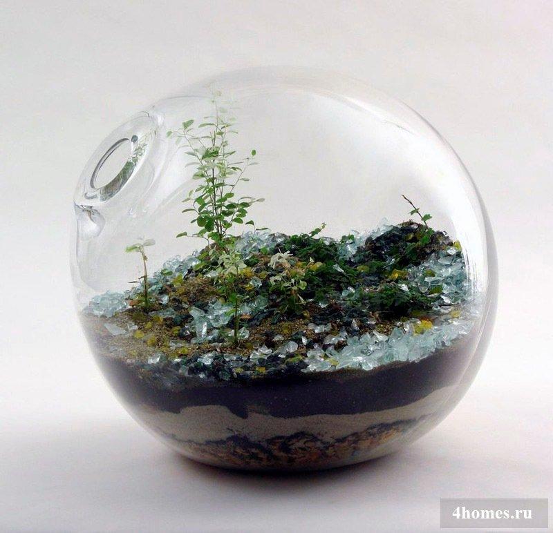 Террариум – изящное украшение для любителей природы