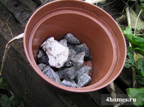 Выгонка гиацинтов - простой и интересный процесс