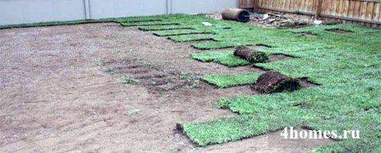производство рулонного газона