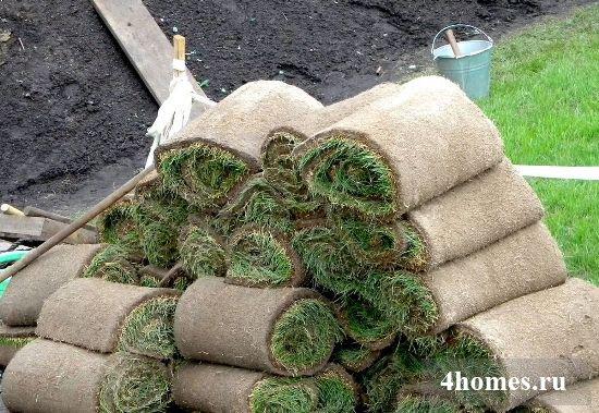 Устройство и особенности рулонного газона