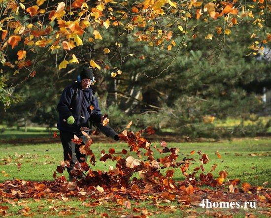 Использование опавших листьев для пользы в саду и огороде
