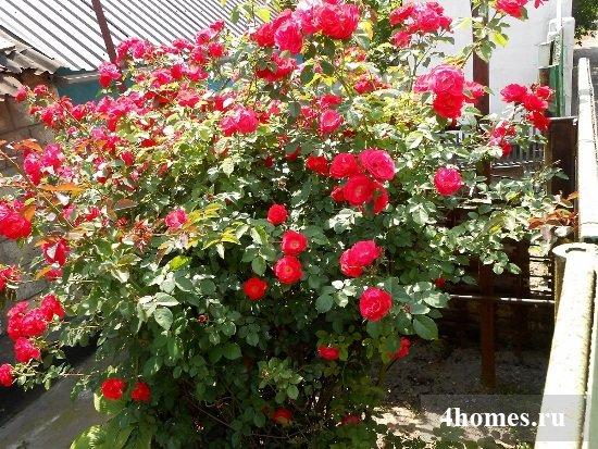 Стойки для плетистых роз