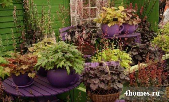 Гейхера в ландшафтном дизайне: сорта, виды, фото