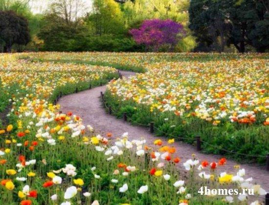 Цветущий весь сезон мавританский газон, фото в ландшафтном дизайне