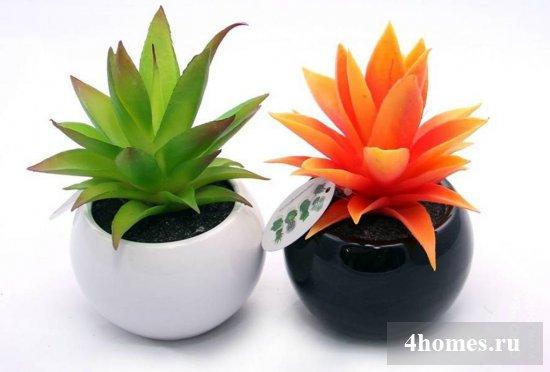 Знакомьтесь - суккуленты - странные и красивые растения