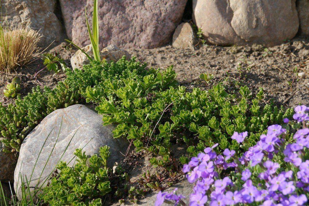 Рокарий или каменный садик