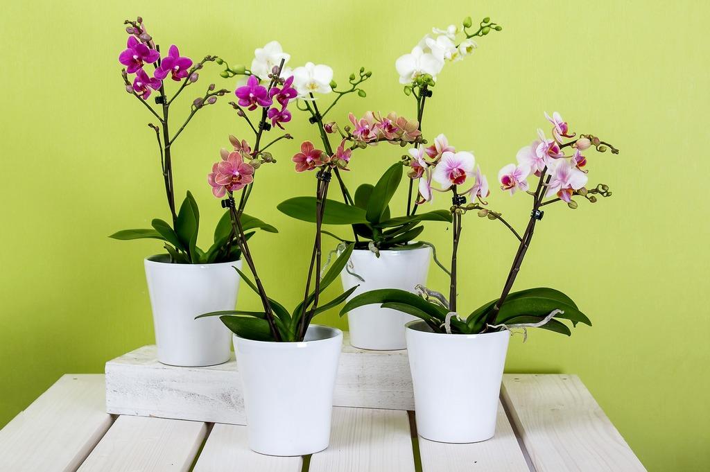 горшки с орхидеями