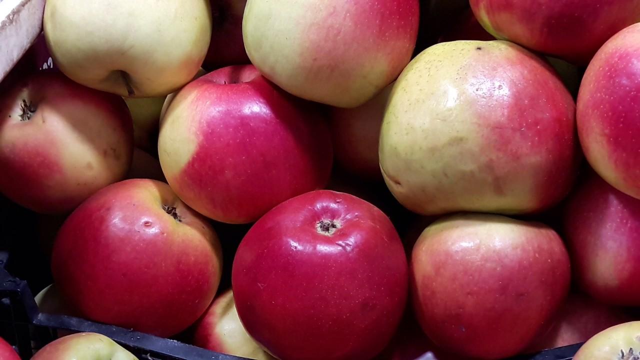 Много вкусных яблок