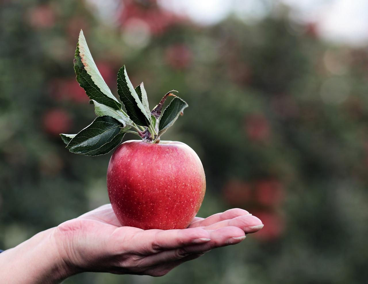 Яблоко на ладони