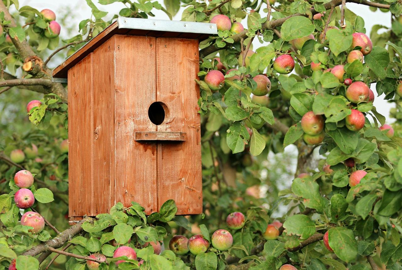 Скворечник на яблоне